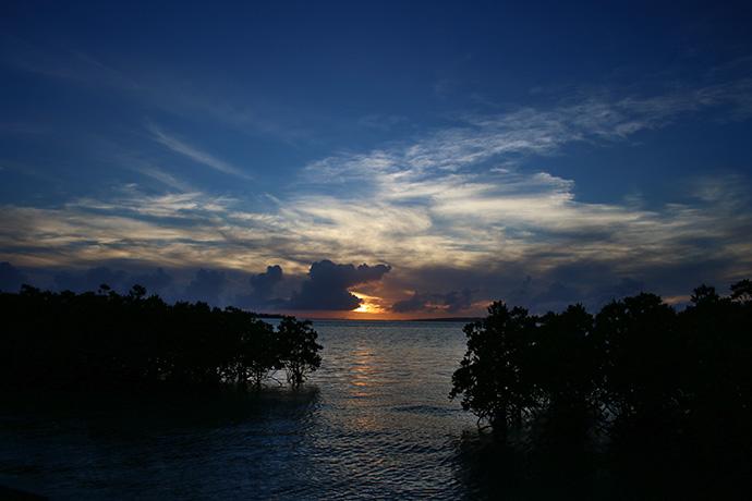 マングローブと夕日1