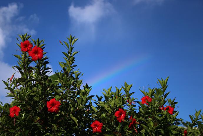 虹とハイビスカス