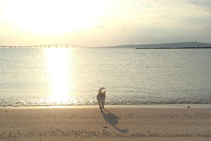 海に向かって一目散