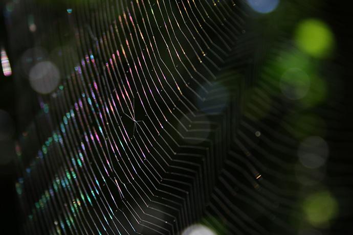 七色蜘蛛の巣