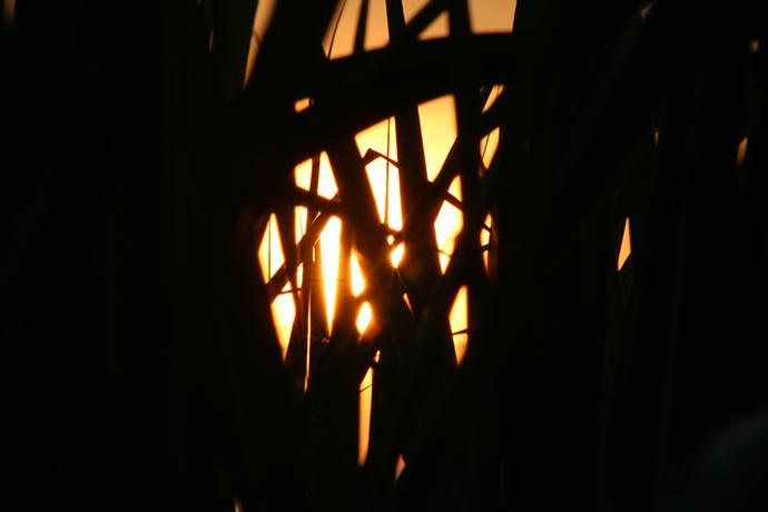 さとうきび畑と夕日3