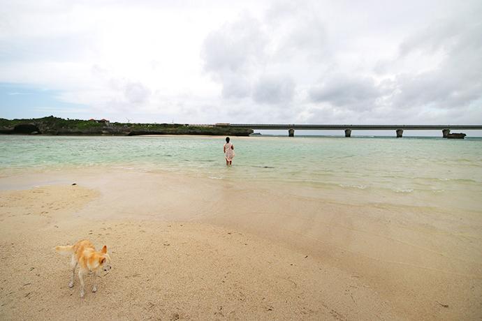 海の中を歩きます