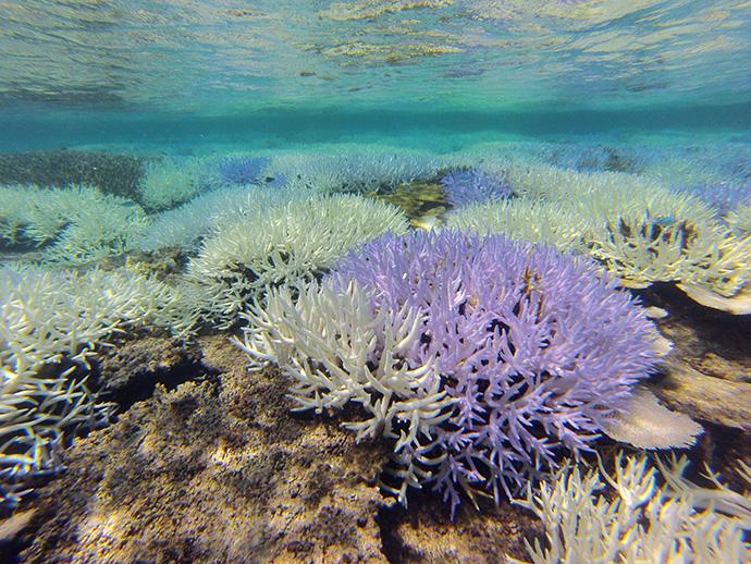 枝珊瑚が特にひどい