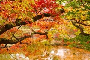 秋を探しに