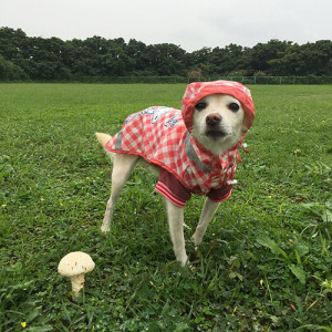 雨すぎる宮古島