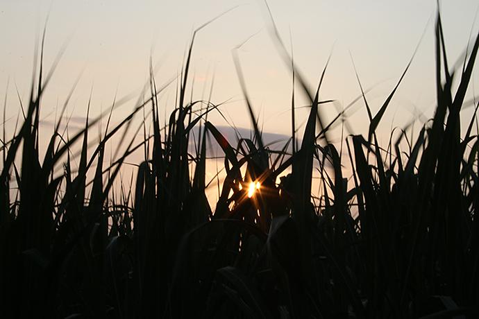 さとうきび畑と夕日2