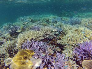 サンゴの白化現象